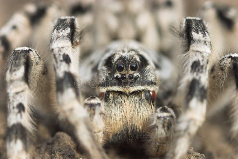αράχνη στοκ εικόνα με δικαίωμα ελεύθερης χρήσης
