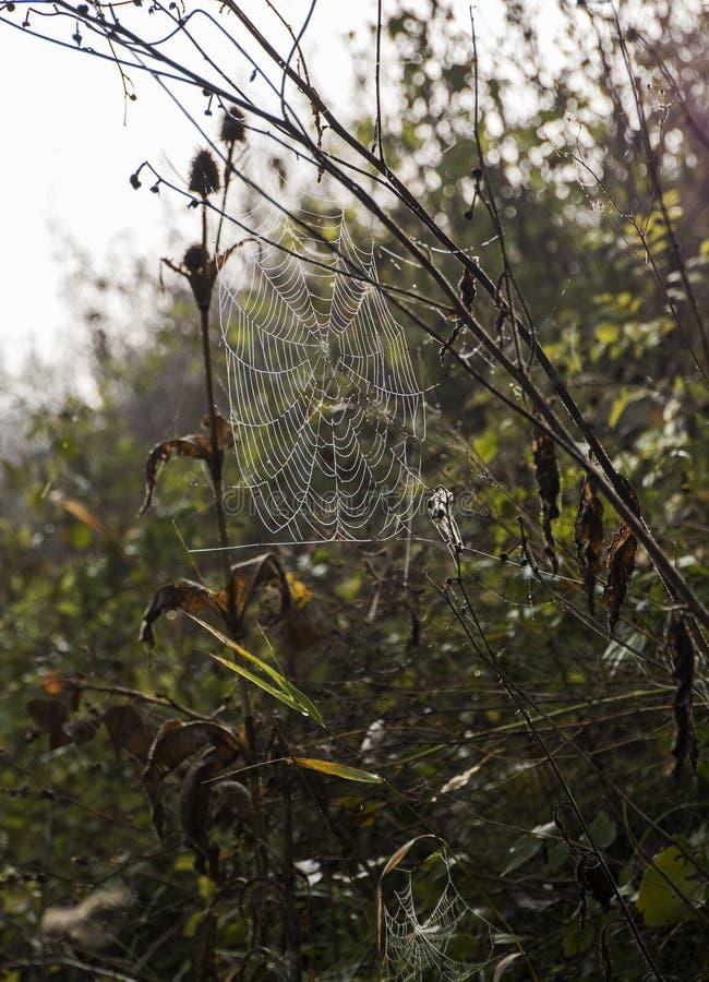 Αράχνη netvork στο πρωί ligt στοκ φωτογραφία με δικαίωμα ελεύθερης χρήσης