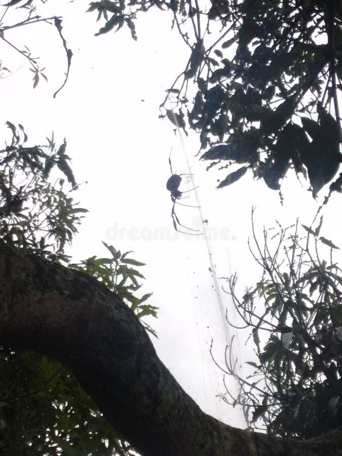 Αράχνη siluet στοκ εικόνες