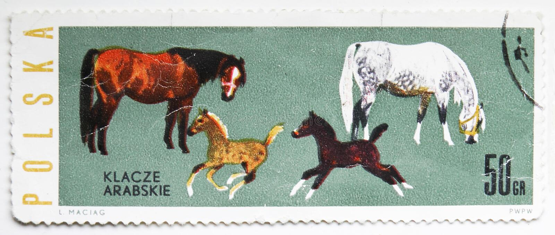 Αραβικό caballus ferus Equus φοράδων και Foals, άλογα serie, circa 1963 στοκ εικόνα