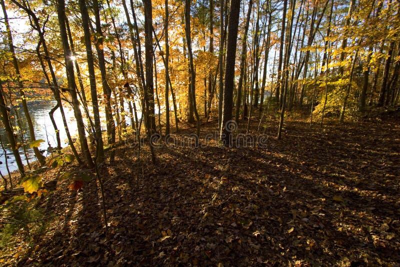 Αργά το απόγευμα ήλιος που λάμπει μέσω των δέντρων και των πετώντας αιχμηρών σκιών στοκ φωτογραφία με δικαίωμα ελεύθερης χρήσης