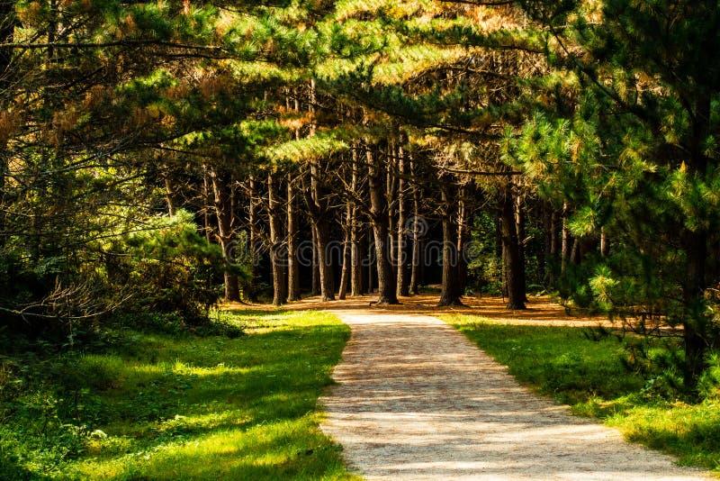 Αργά το απόγευμα περίπατος στο δάσος στοκ φωτογραφίες