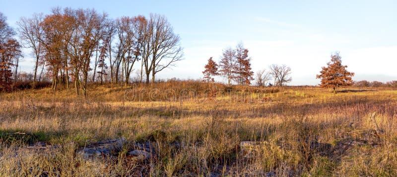 Αργά το απόγευμα στο Midwest λιβάδι το Νοέμβριο στοκ εικόνες με δικαίωμα ελεύθερης χρήσης