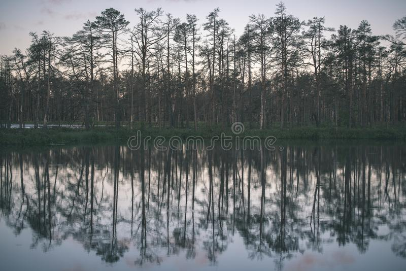 αργά το βράδυ ήλιος πέρα από τις λίμνες ελών το καλοκαίρι - η εκλεκτής ποιότητας αναδρομική ταινία κοιτάζει στοκ εικόνες