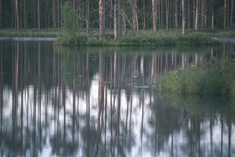 αργά το βράδυ ήλιος πέρα από τις λίμνες ελών το καλοκαίρι - η εκλεκτής ποιότητας αναδρομική ταινία κοιτάζει στοκ φωτογραφίες με δικαίωμα ελεύθερης χρήσης