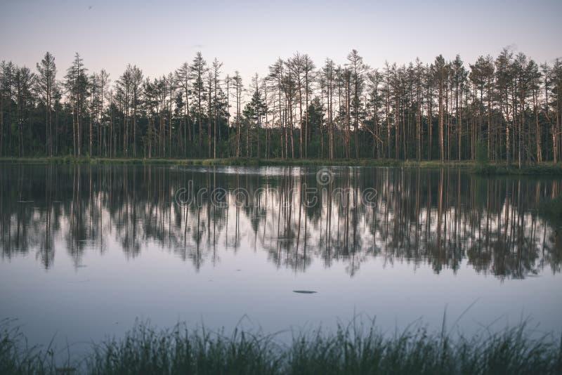 αργά το βράδυ ήλιος πέρα από τις λίμνες ελών το καλοκαίρι - η εκλεκτής ποιότητας αναδρομική ταινία κοιτάζει στοκ φωτογραφία με δικαίωμα ελεύθερης χρήσης