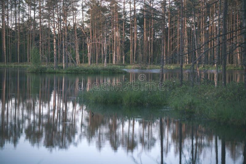 αργά το βράδυ ήλιος πέρα από τις λίμνες ελών το καλοκαίρι - η εκλεκτής ποιότητας αναδρομική ταινία κοιτάζει στοκ εικόνα