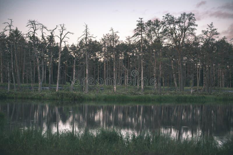 αργά το βράδυ ήλιος πέρα από τις λίμνες ελών το καλοκαίρι - η εκλεκτής ποιότητας αναδρομική ταινία κοιτάζει στοκ φωτογραφία