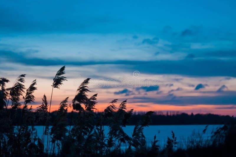 Αργά το βράδυ χειμερινό τοπίο, παγωμένη λίμνη, bulrush, μπλε και ρόδινος ουρανός, βαθιά μπλε σύννεφα, φωτογραφία υποβάθρου πανορά στοκ εικόνες