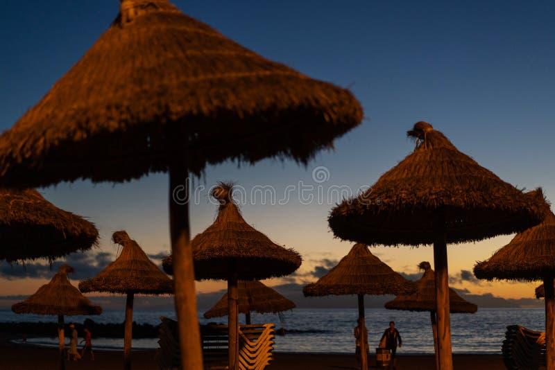 Αργόσχολοι παραλιών στο ηλιοβασίλεμα σε μια τροπική παραλία στοκ εικόνα με δικαίωμα ελεύθερης χρήσης