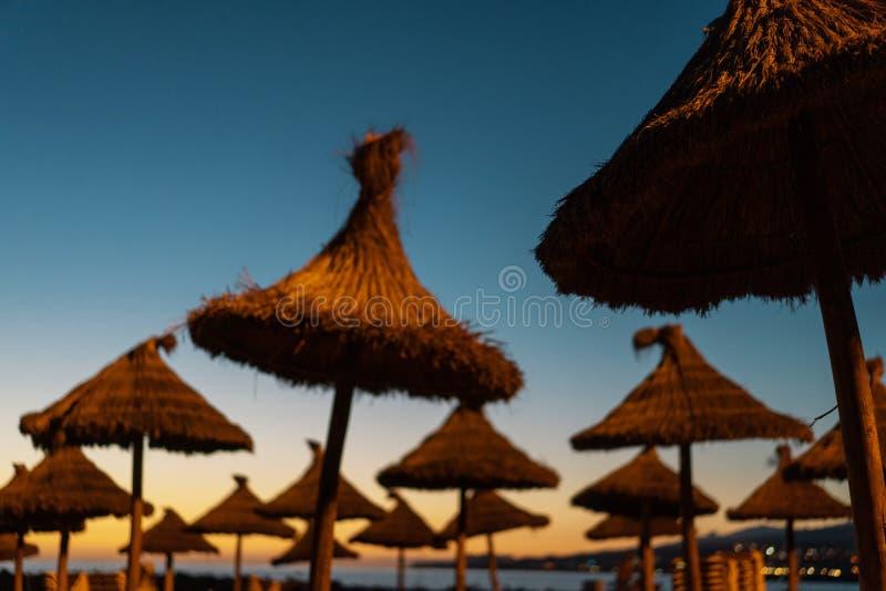 Αργόσχολοι στο ηλιοβασίλεμα σε μια τροπική παραλία στοκ φωτογραφία με δικαίωμα ελεύθερης χρήσης