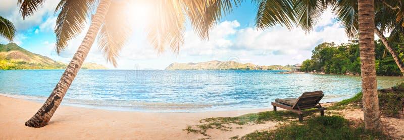 Αργόσχολος παραλιών στην παραλία άμμου στοκ εικόνες