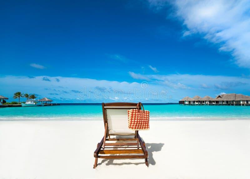 Αργόσχολος παραλιών στην παραλία άμμου στοκ φωτογραφία