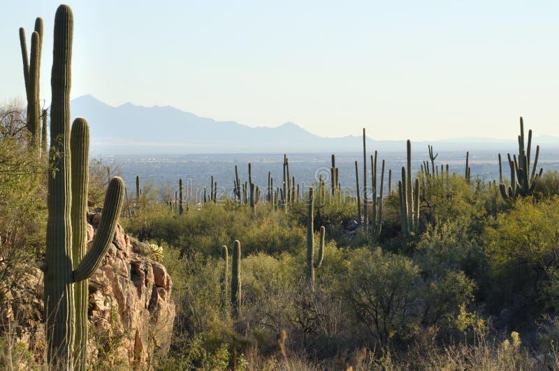 Αριζόνα Tucson στοκ εικόνες με δικαίωμα ελεύθερης χρήσης