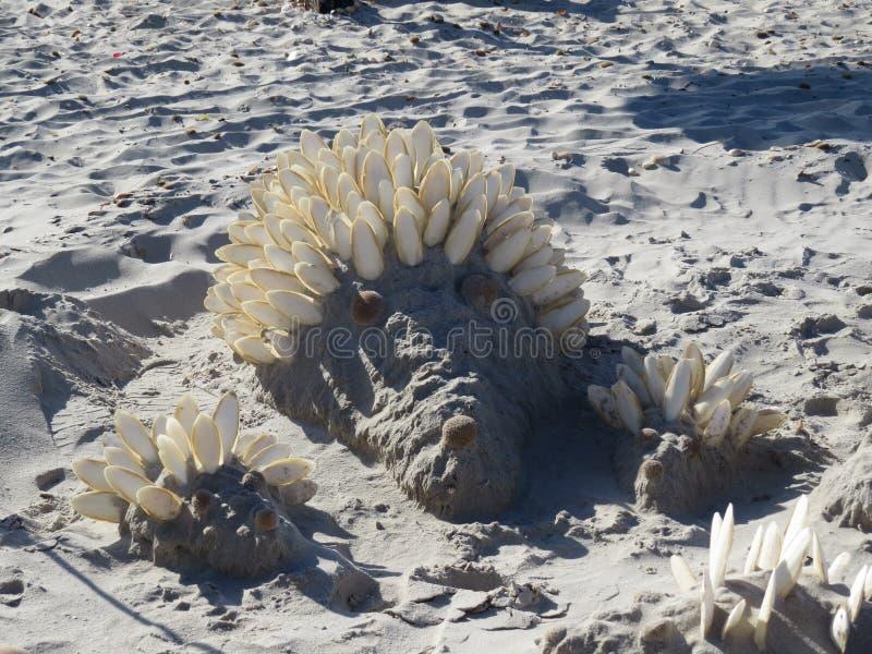 Αριθμοί της άμμου και των κοχυλιών στην παραλία ενάντια στη θάλασσα στοκ εικόνες