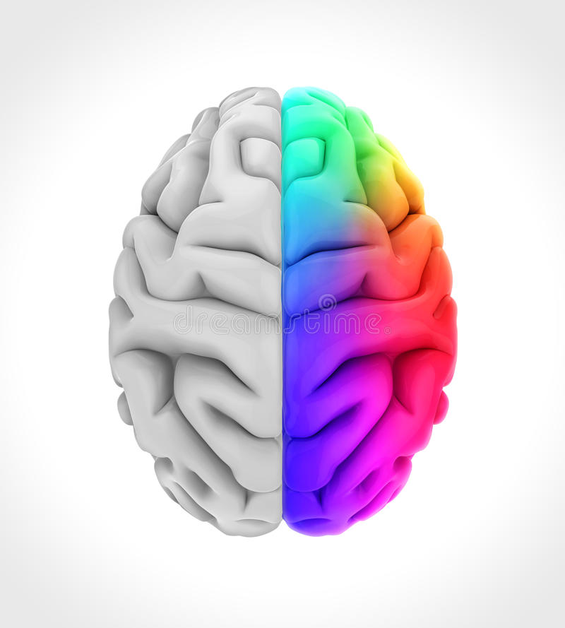 Αριστερός και δεξιός ανθρώπινος εγκέφαλος διανυσματική απεικόνιση