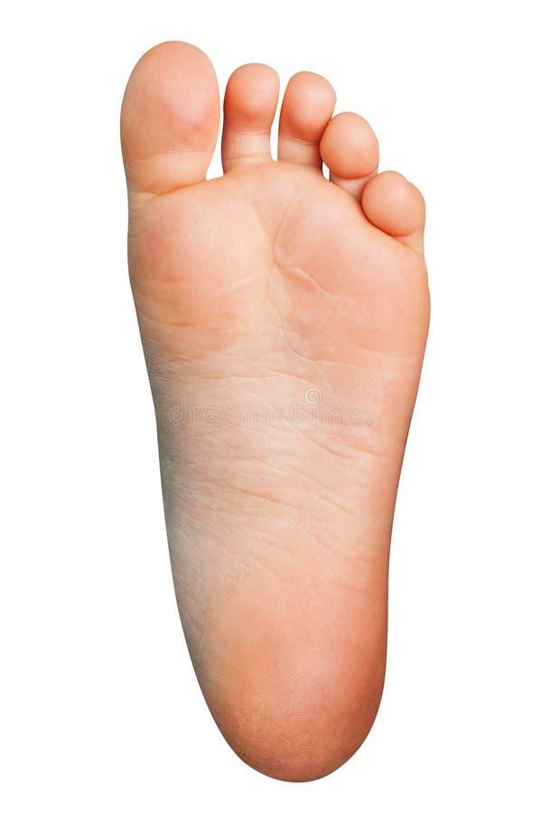 Αριστερό πόδι Cutted έξω Απομονωμένο ανθρώπινο πέλμα στο άσπρο υπόβαθρο στοκ φωτογραφία με δικαίωμα ελεύθερης χρήσης