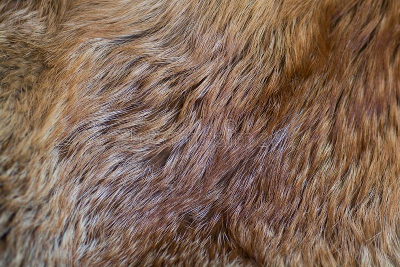 Αριστοκρατική και πολυτελής κόκκινη γούνα αλεπούδων στοκ φωτογραφίες