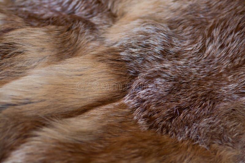 Αριστοκρατική και πολυτελής κόκκινη γούνα αλεπούδων στοκ φωτογραφίες με δικαίωμα ελεύθερης χρήσης