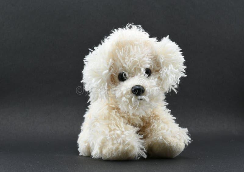 Αρκετά άσπρο παιχνίδι σκυλιών που απομονώνεται στο μαύρο υπόβαθρο με το μέρος του διαστήματος για το μήνυμα στοκ εικόνα