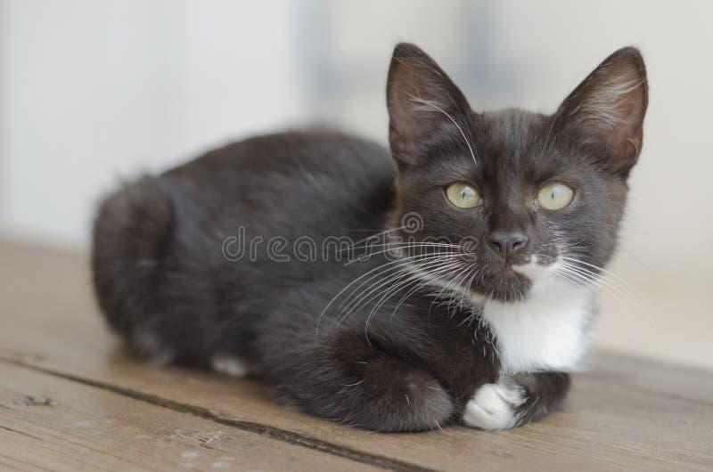 Αρκετά γραπτό γατάκι που σκύβεται στον ξύλινο πάγκο στοκ φωτογραφίες