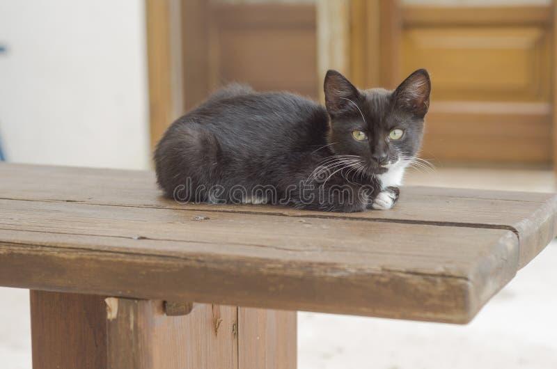 Αρκετά γραπτό γατάκι που σκύβεται στον ξύλινο πάγκο στοκ φωτογραφία με δικαίωμα ελεύθερης χρήσης