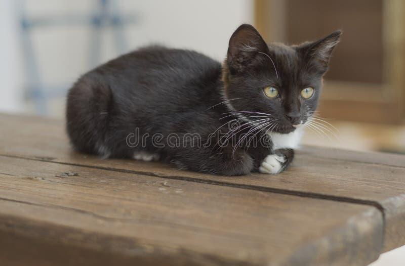 Αρκετά γραπτό γατάκι που σκύβεται στον ξύλινο πάγκο στοκ εικόνες