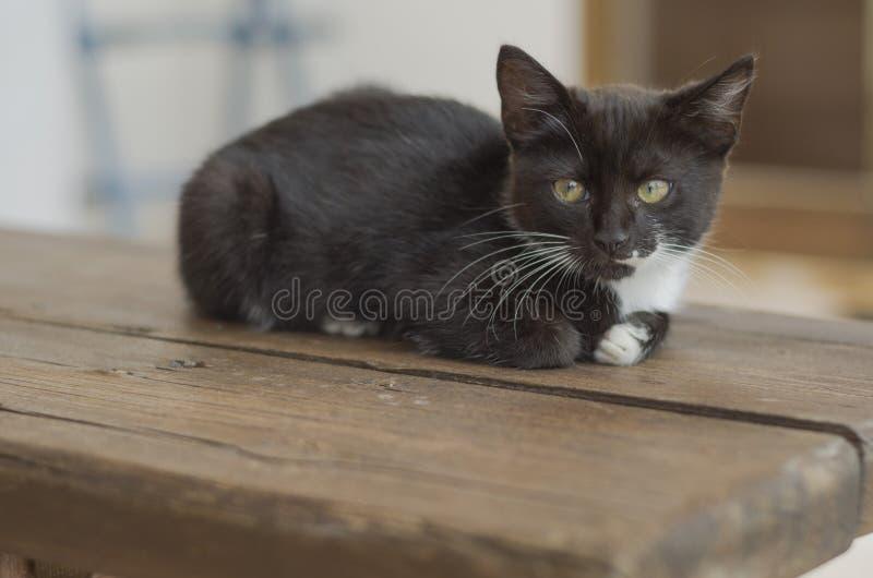 Αρκετά γραπτό γατάκι που σκύβεται στον ξύλινο πάγκο στοκ φωτογραφία