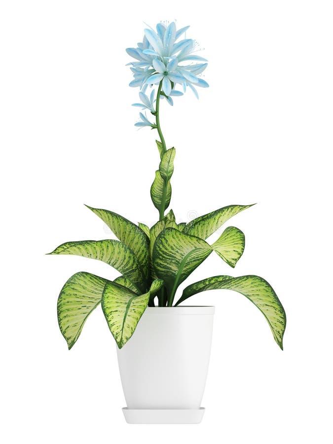 Αρκετά μπλε άνθισμα Hosta διανυσματική απεικόνιση