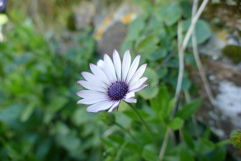 Αρκετά πορφυρό λουλούδι στοκ φωτογραφία με δικαίωμα ελεύθερης χρήσης