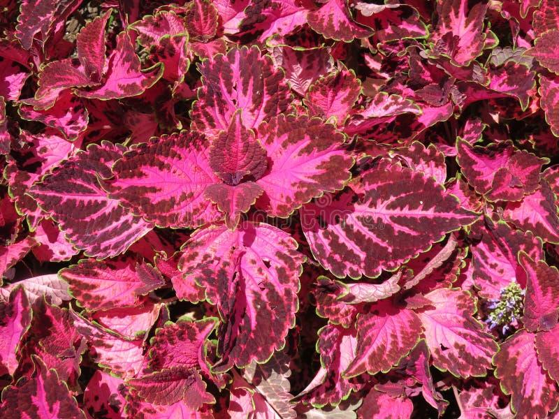 Αρκετά χρωματισμένα φύλλα το καλοκαίρι τον Ιούνιο στοκ εικόνες με δικαίωμα ελεύθερης χρήσης