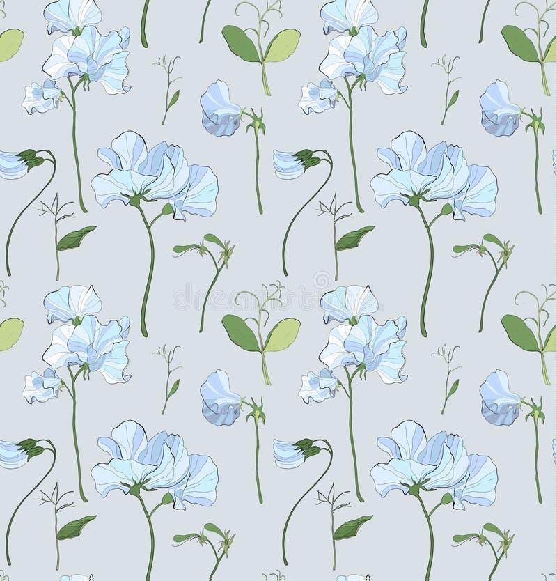 Αρκετά floral σχέδιο με τα λουλούδια των γλυκών μπιζελιών διανυσματική απεικόνιση