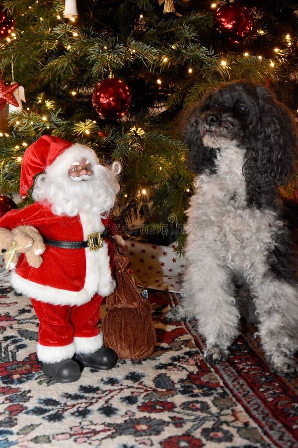 Αρλεκίνος και Άγιος Βασίλης που κάθονται δίπλα στο χριστουγεννιάτικο δέντρο στοκ φωτογραφία
