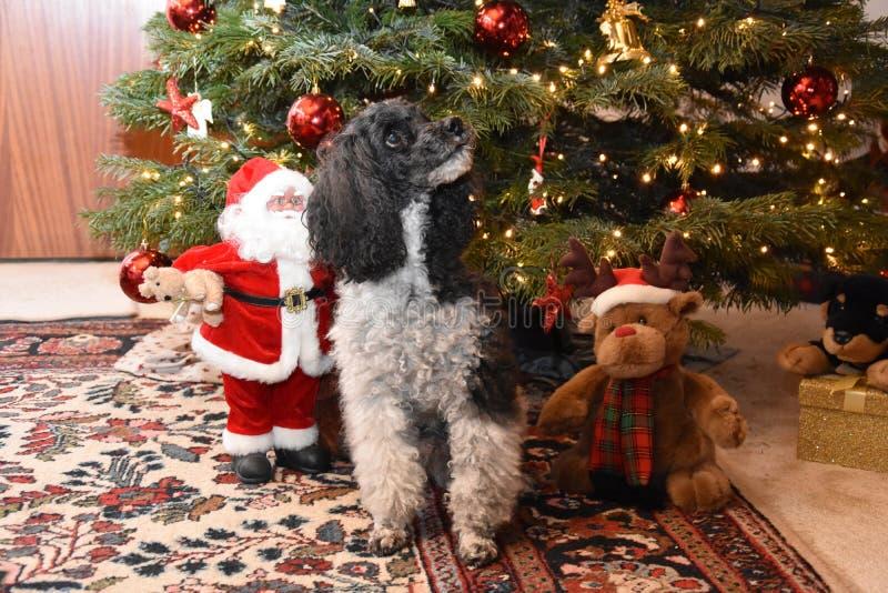 Αρλεκίνος και Άγιος Βασίλης που κάθονται δίπλα στο χριστουγεννιάτικο δέντρο στοκ φωτογραφίες