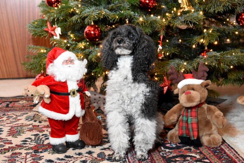 Αρλεκίνος και Άγιος Βασίλης που κάθονται δίπλα στο χριστουγεννιάτικο δέντρο στοκ φωτογραφία με δικαίωμα ελεύθερης χρήσης