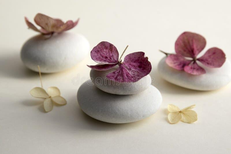 Αρμονία και ισορροπία, τύμβοι, ξηρά άσπρα και κόκκινα λουλούδια hydrangea στοκ φωτογραφία με δικαίωμα ελεύθερης χρήσης
