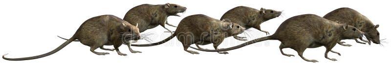 Αρουραίος, αρουραίοι, τρέξιμο, απομονωμένη απεικόνιση διανυσματική απεικόνιση