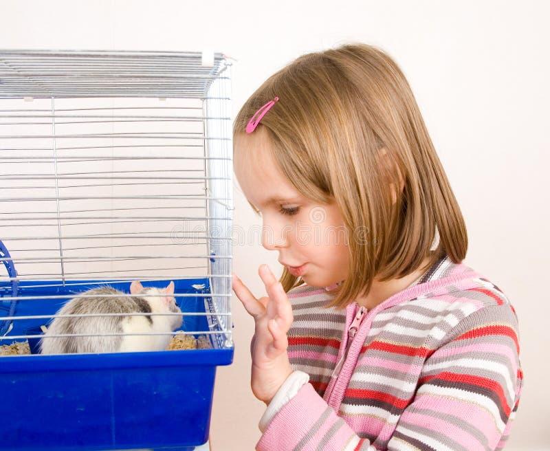 αρουραίος παιδικών παιχν στοκ εικόνες με δικαίωμα ελεύθερης χρήσης