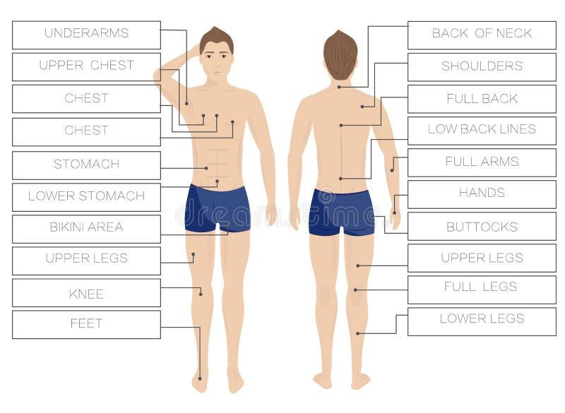 Αρσενικές ζώνες αφαίρεσης τρίχας λέιζερ Depilation σωμάτων περιοχής άτομα πίσω μέτωπο ελεύθερη απεικόνιση δικαιώματος