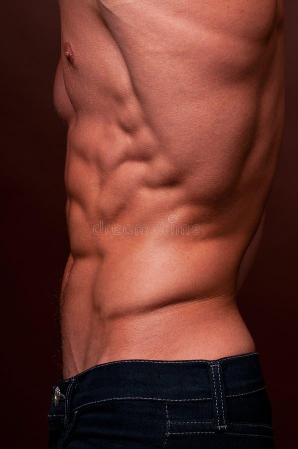 αρσενικός κορμός στοκ φωτογραφία με δικαίωμα ελεύθερης χρήσης