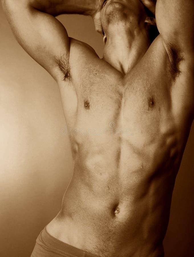 Download αρσενικός κορμός στοκ εικόνα. εικόνα από τακτοποίηση, πίεση - 392387