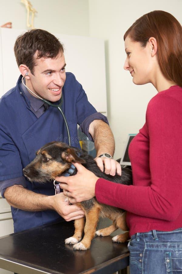 Αρσενικός κτηνιατρικός χειρούργος που εξετάζει το σκυλί στη χειρουργική επέμβαση στοκ εικόνες