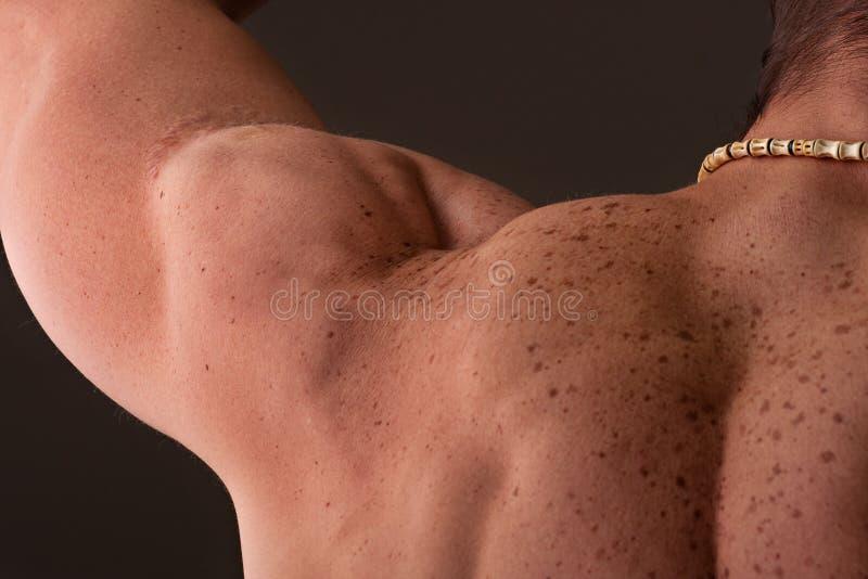 αρσενικός μυϊκός ώμος στοκ εικόνα με δικαίωμα ελεύθερης χρήσης