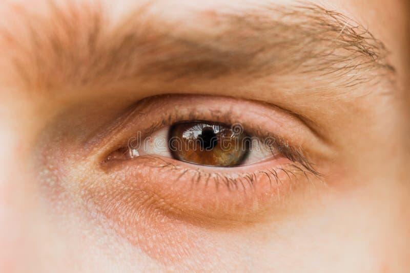 Αρσενικός στενός επάνω ματιών το άτομο εξετάζει το πλαίσιο καφετιά ίριδα στη μακροεντολή στοκ φωτογραφίες με δικαίωμα ελεύθερης χρήσης