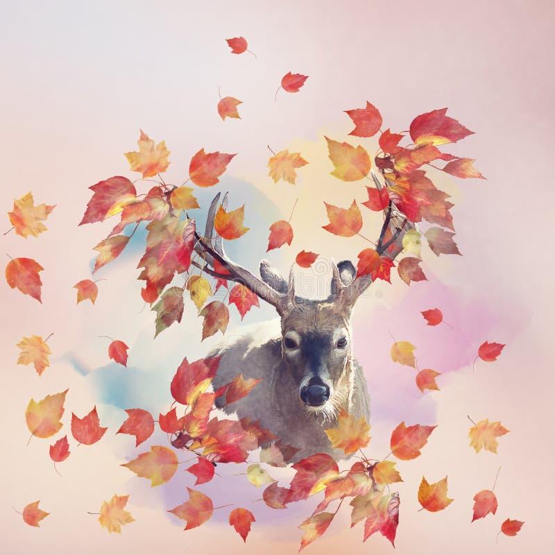 Αρσενικό πορτρέτο ελαφιών με την έννοια φθινοπώρου στοκ εικόνες