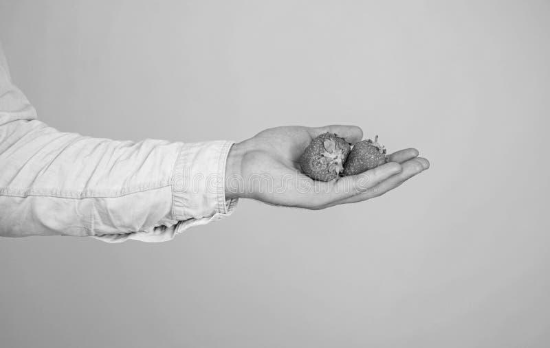Αρσενικό χέρι με το μπλε υπόβαθρο φραουλών Βοήθεια οι ίδιοι Το χέρι προτείνει παίρνει τη φράουλα Νόστιμος οργανικός μούρων μεταχε στοκ εικόνα