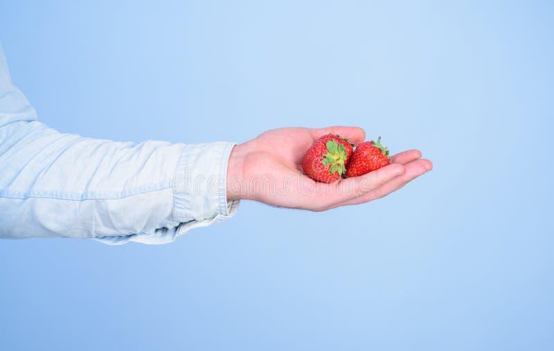 Αρσενικό χέρι με το μπλε υπόβαθρο φραουλών Οδηγίες οι ίδιοι Το χέρι προτείνει παίρνει τη φράουλα Νόστιμος οργανικός μούρων μεταχε στοκ εικόνες