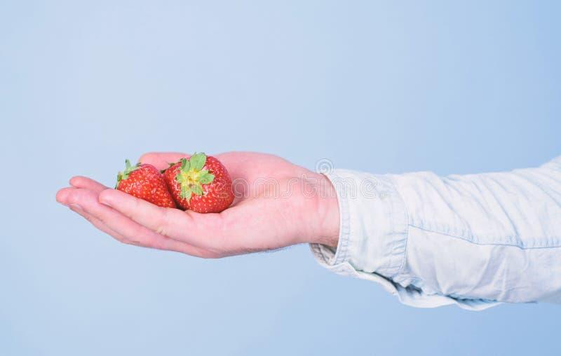 Αρσενικό χέρι με το μπλε υπόβαθρο φραουλών Οδηγίες οι ίδιοι Το χέρι προτείνει παίρνει τη φράουλα Πάρτε τη φράουλα εάν θέλετε στοκ εικόνες