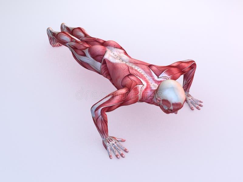 Αρσενικό workout - pushups ελεύθερη απεικόνιση δικαιώματος
