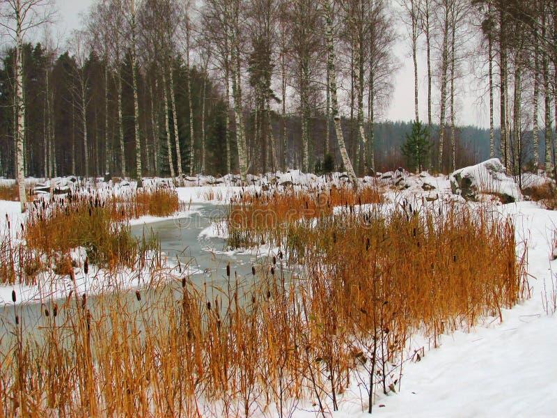 Αρχή του χειμώνα στην όχθη της λίμνης Saimaa στοκ φωτογραφία